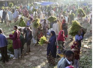 Khat, Ethiopia's 4th largest export, suffers after European ban
